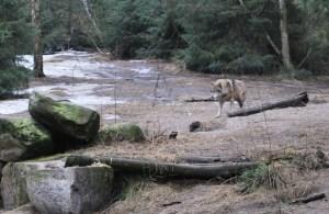 Wolf im Wildpark. Foto: Lutz Reinhardt
