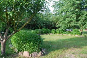 Derzeit grüner Blumenmond. Mitte Juni blüht hier das Sonnenauge üppigst, jetzt blinzelt nur hier und da eine Margaritte
