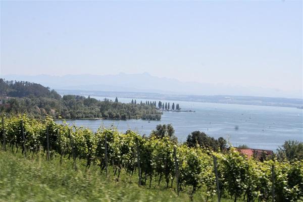 Foto Blick aus dem Weinberg auf dem Bodensee