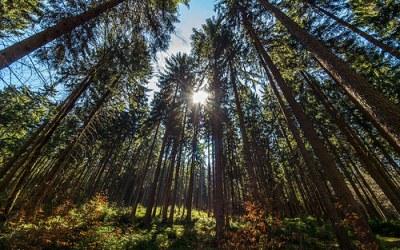 Heul veul bomen
