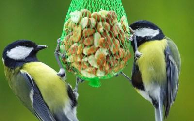 Van vogels voeren word je blij