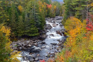 roaring river with foliage