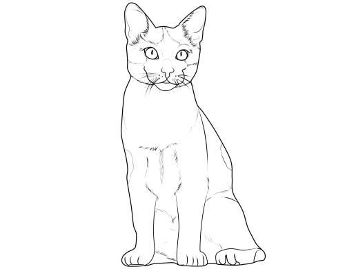 Kostenlose Malvorlage Katzen Katzenrassen Europisch