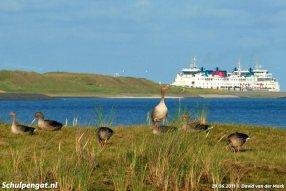 Texel en al haar natuurlijke schoonheid, met op de achtergrond een bekende veerboot.