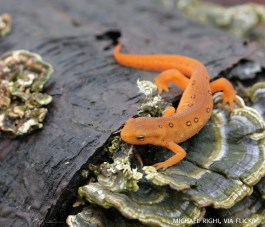19_There are 5 kinds of salamanders at the Schuylkill Center