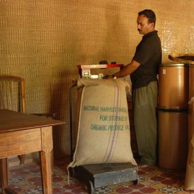 In Kottayam wird der Pfeffer in 25 kg Säcke verpackt und dann nach Deutschland verschifft.