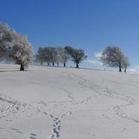 Winter am Schauinsland