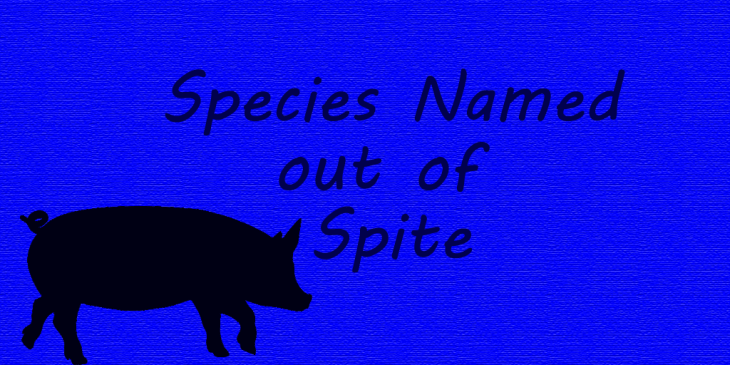 Picture of a pig. Species named out of spite.