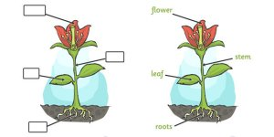 Plant Science  Learn about flowers