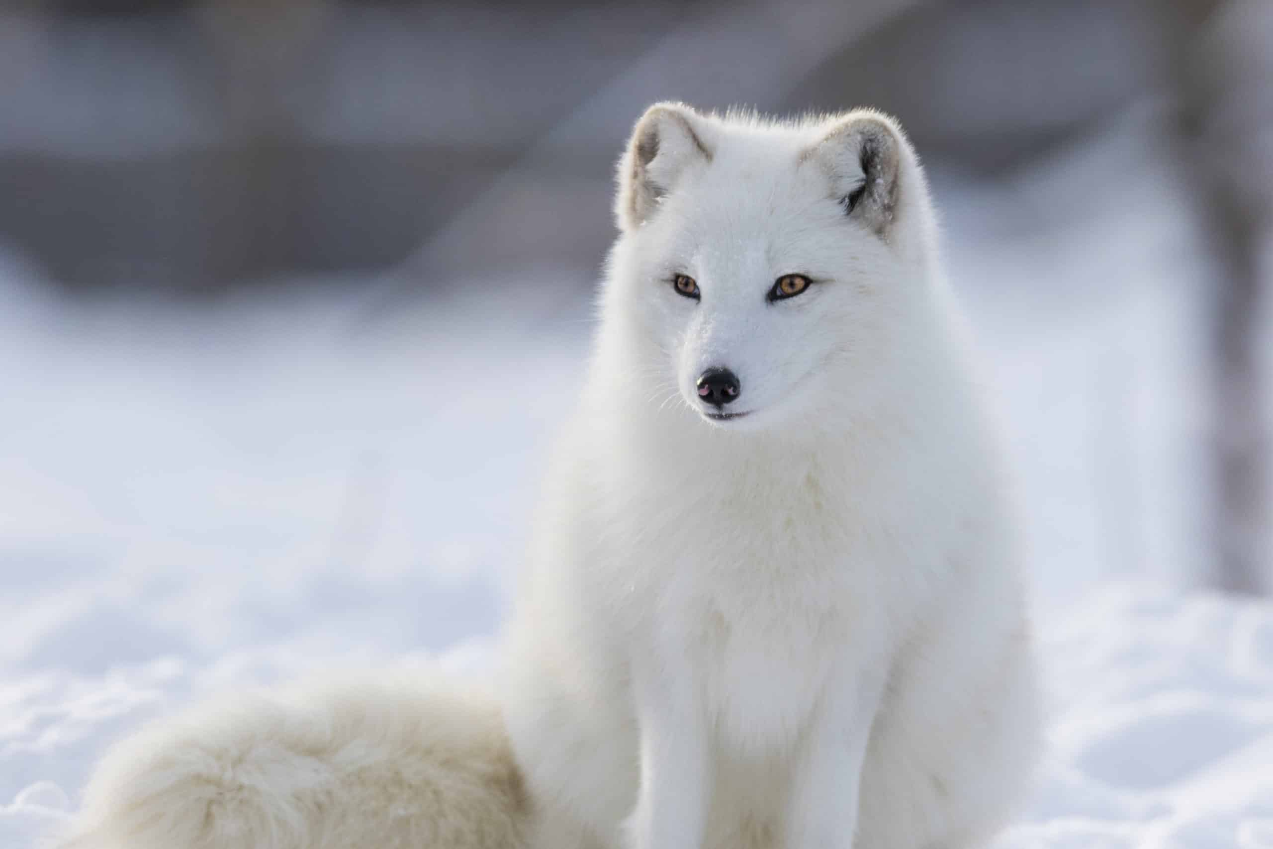 Polar Habitats For Kids
