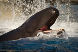 Can a Whale Swallow A Human? | ScienceABC