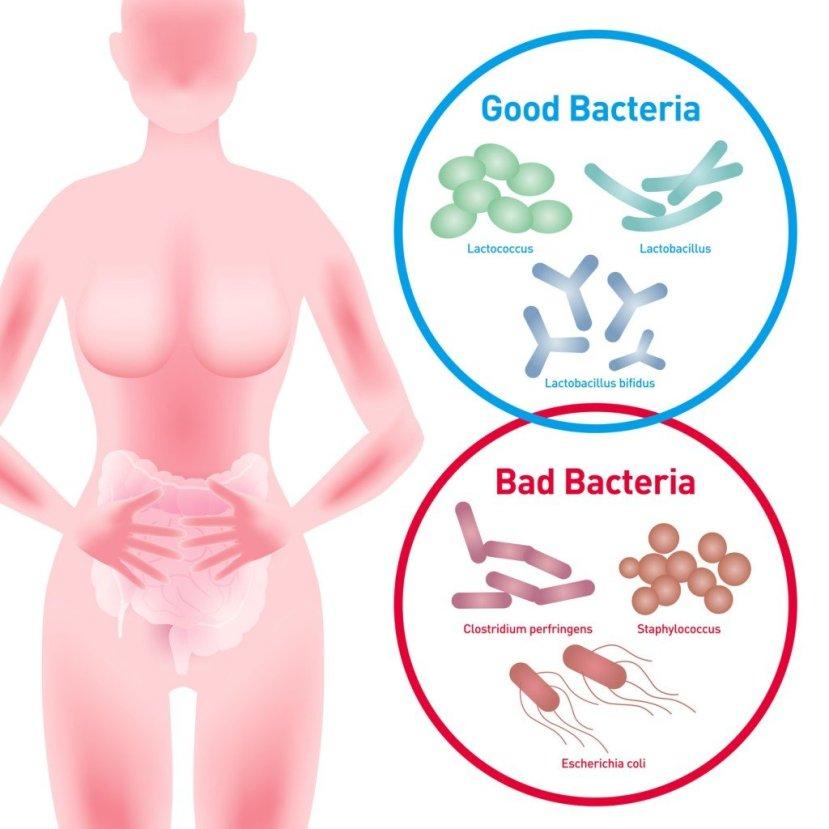 Good vs. Bad Bacteria (Crédito da foto: chombosan / Fotolia)