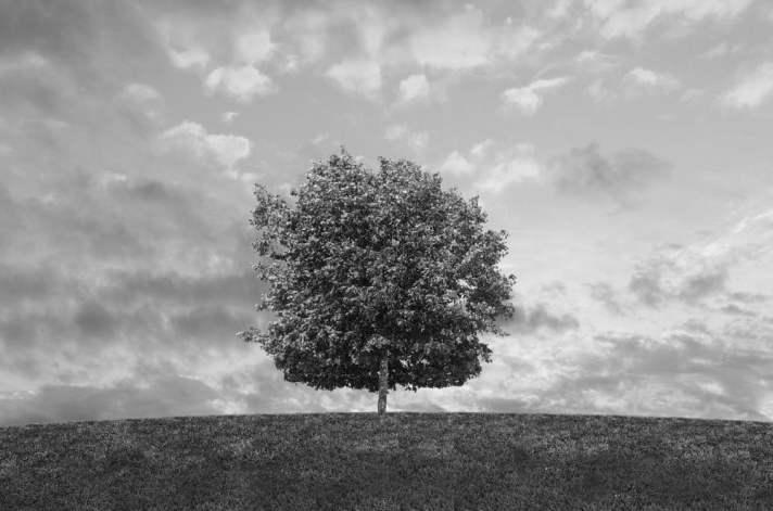 Árvore preta e branca na luz solar