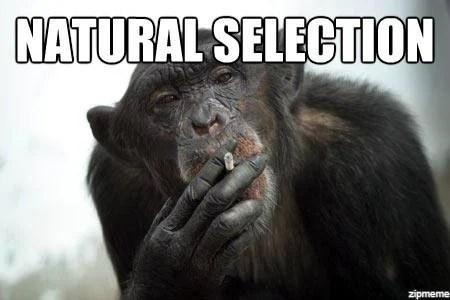 meme de seleção natural