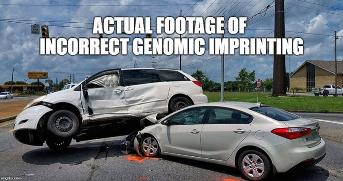 Actual footage of incorrect genomic imprinting meme