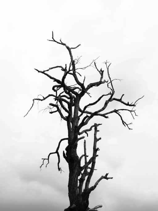 ramos preto e branco nublado