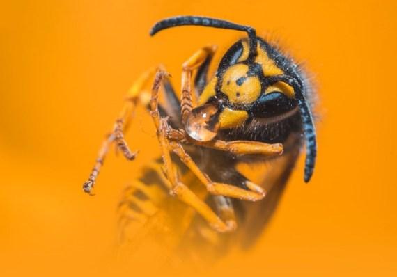 vespa de jaqueta amarela