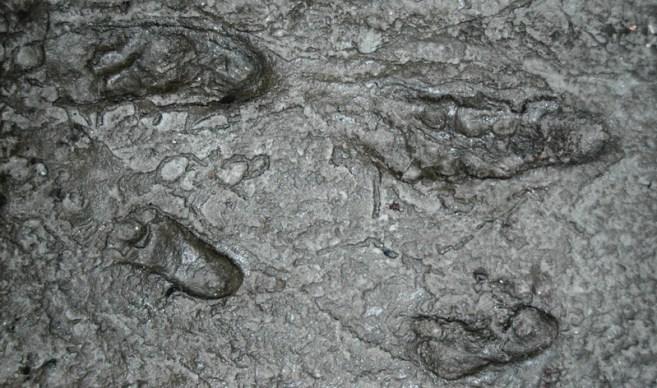 Pegadas de hominídeos fósseis de Australopithecus afarensis