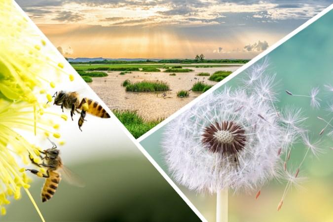 Principais exemplos de serviços regulatórios fornecidos pela natureza.