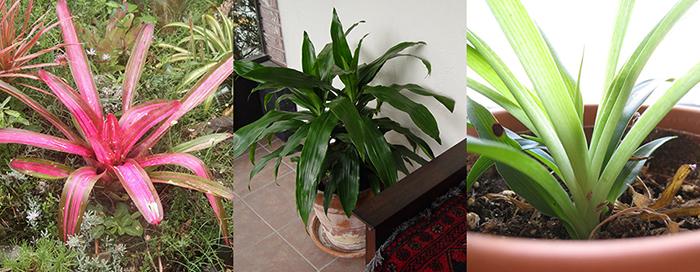 houseplants-2