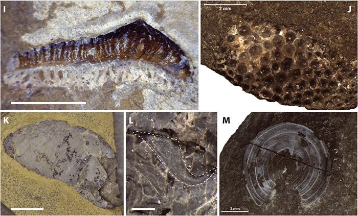 fossil-paris