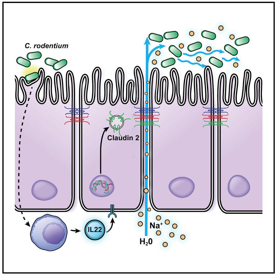 bacteria june new