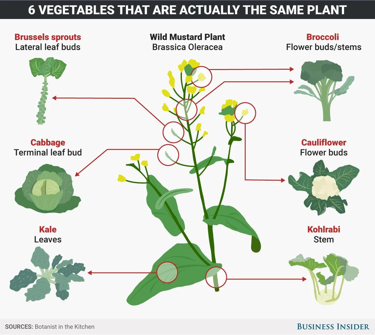 These 6 Common Vegetables Are Actually All The Same Plant