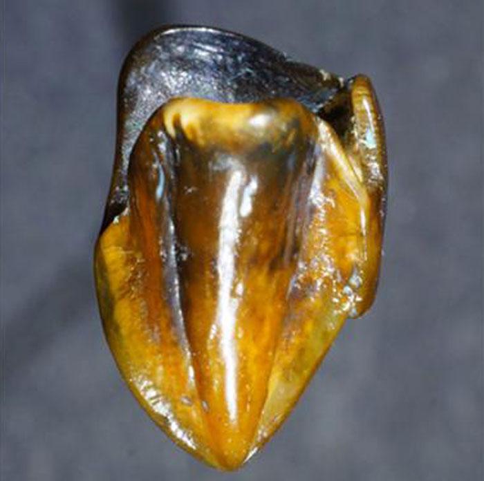 725 hominin teeth 2