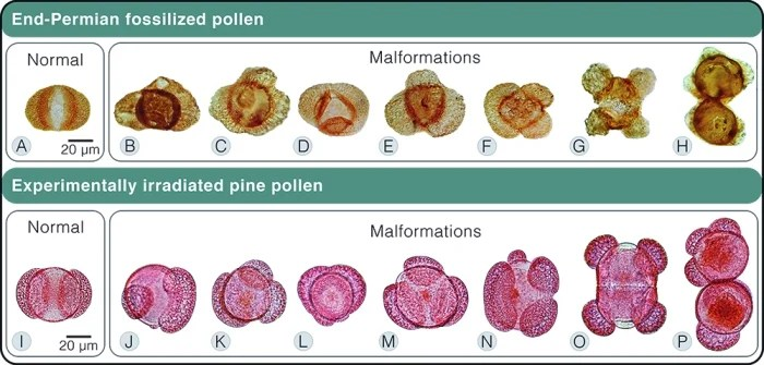 ozone malformed pollen