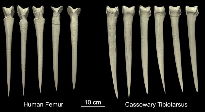 bone daggers 3