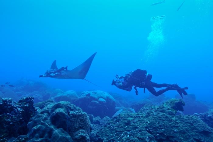 manta ray 4