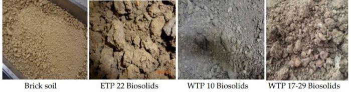 brick solids and poop