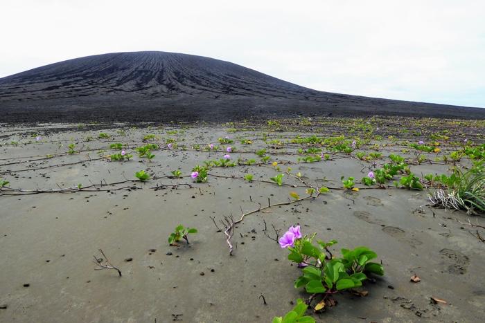 028 hunga tonga island volcano life 3