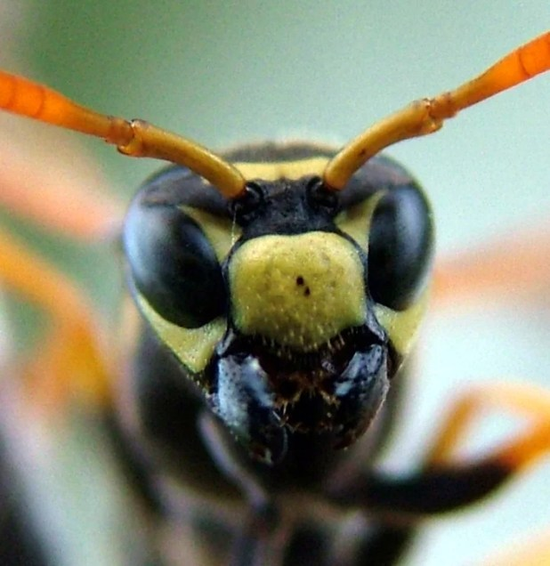 Transitive inference of wasps 012 1