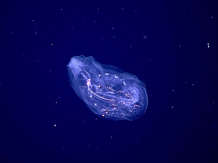 (NOAA/Wikimedia Commons)