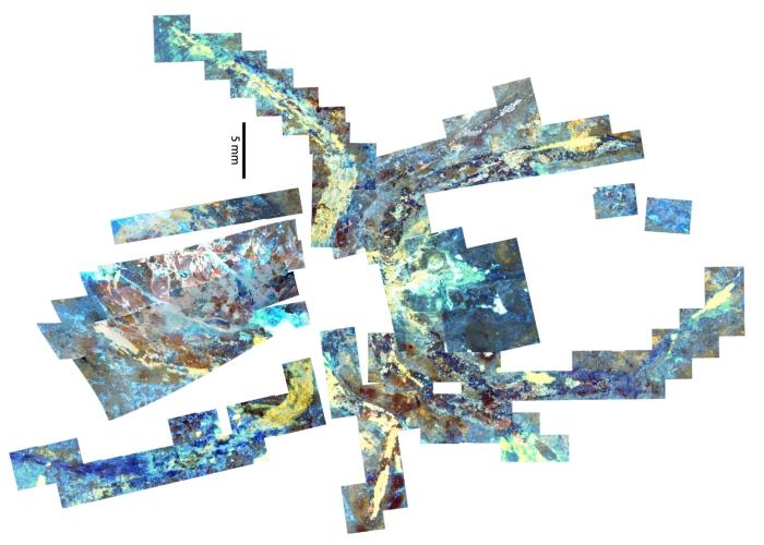 fossil microscopy