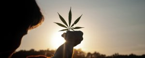 If You Use Cannabis, Here's What You Need To Know About Its Greenhouse Gas Emissions