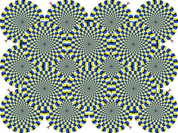 optical illusions find cat # 25