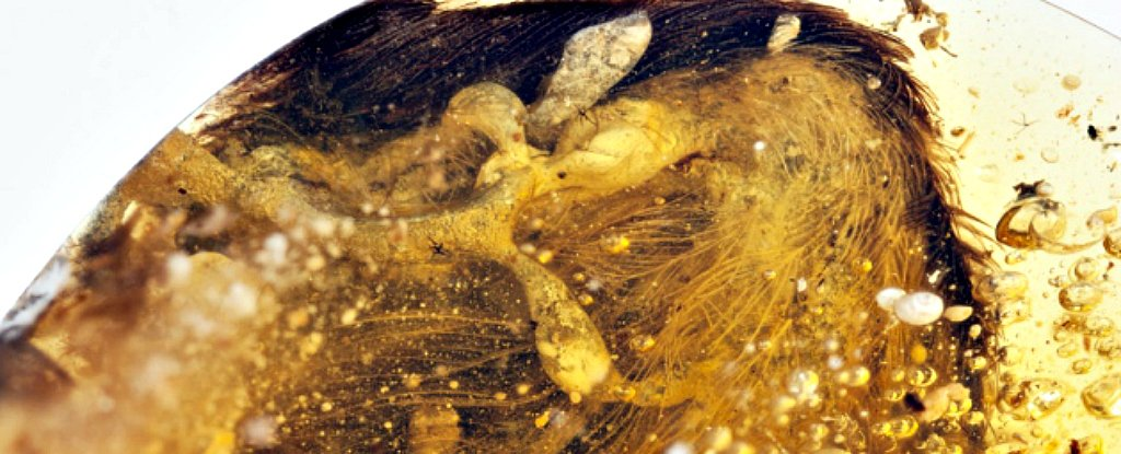 99 Million Year Old Dinosaur Bird Wings Found Preserved In