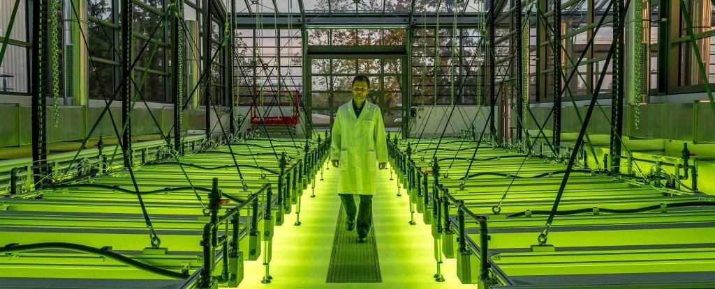 Airbus Has Just Created A Jet That Runs On Algae