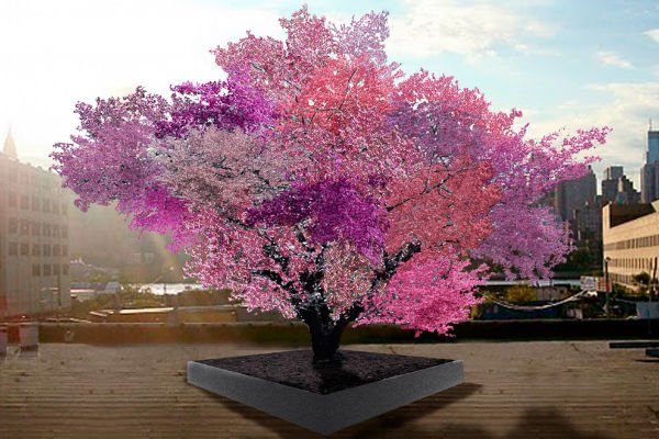 This tree produces 40 different types of fruit  40-fruits