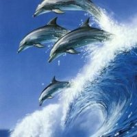 Questions And Answers About Dolphins