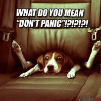 Panic Attacks and Panic Disorder