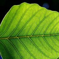 Who Discovered Photosynthesis?