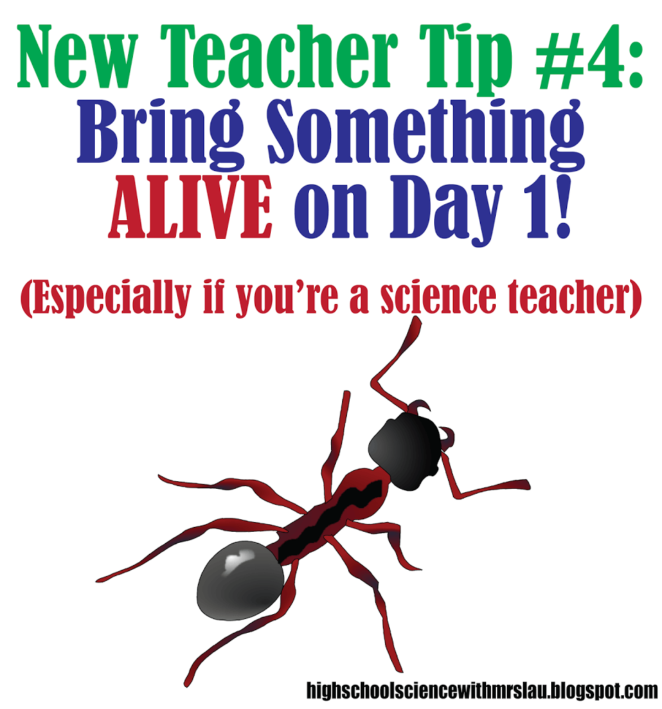 Latest Scientific News: New Teacher Tip #4: Bring Something ALIVE On The First Day