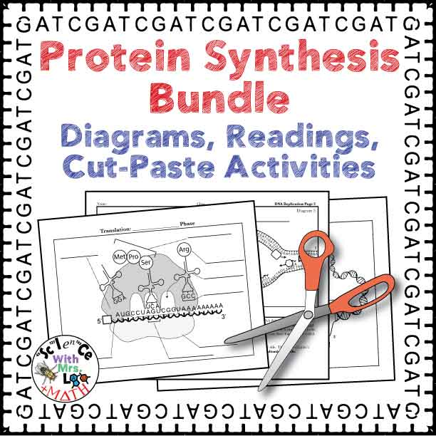 protein synthesis activity