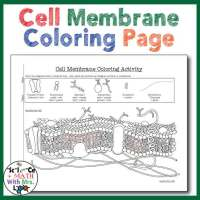 cell membrane coloring activity