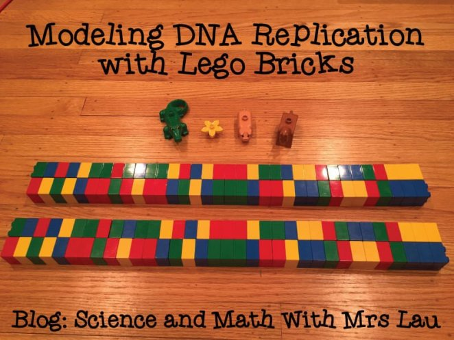 dna-replication-with-legos