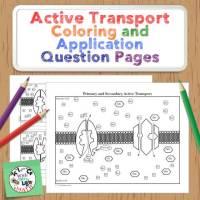 Active Transport and Sodium Potassium Pump Coloring Activity