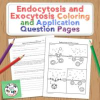 Endocytosis and Exocytosis Coloring Activity
